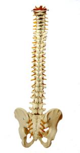 Chiropraktik in Schwerin