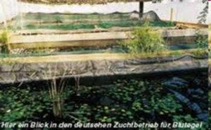 Bluegelfarm Bieberthal